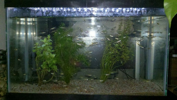Cheap LED Lamp Into Aquarium Hood Lighting Hack