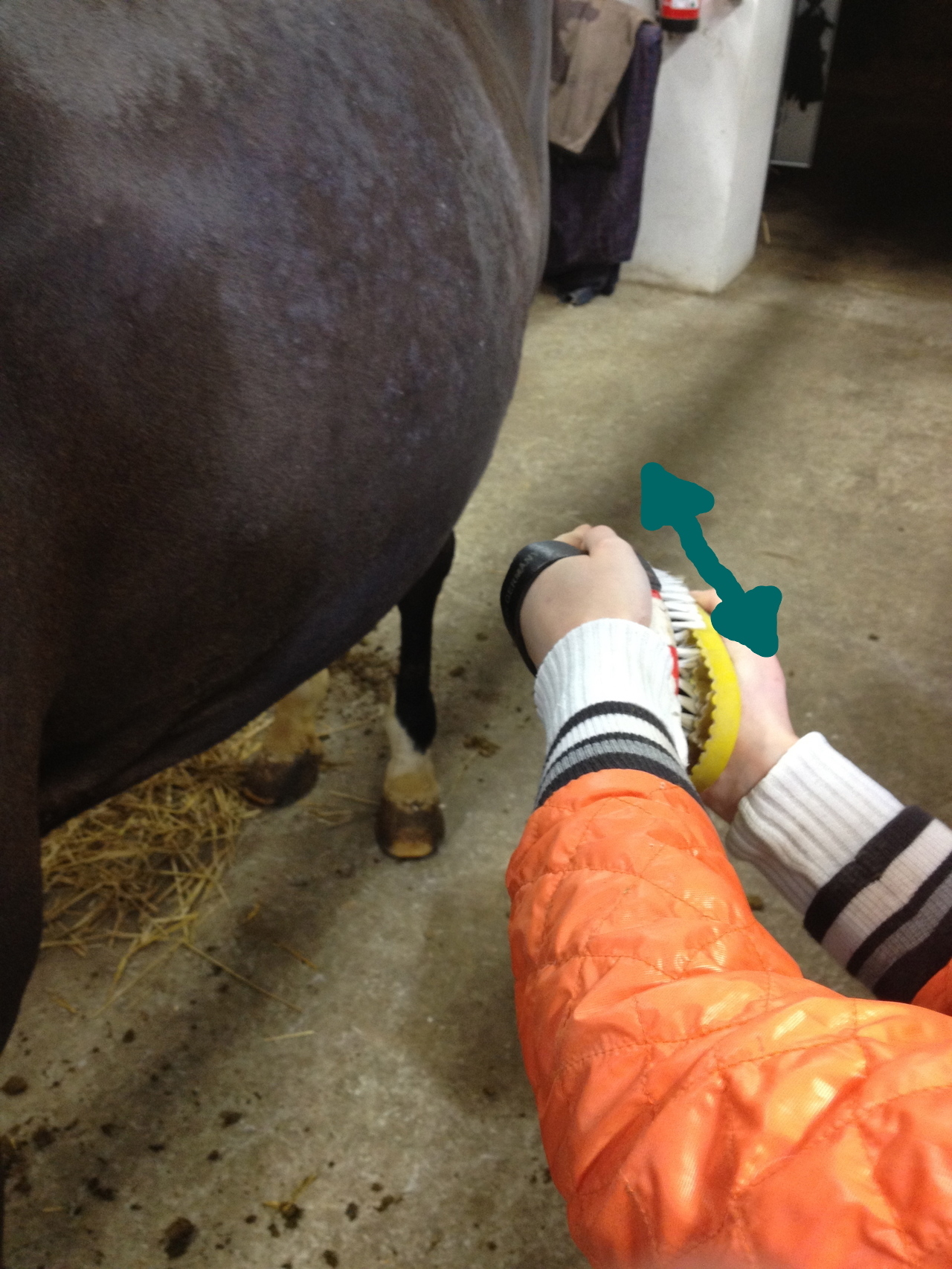 Picture of Grooming the Horses Fur