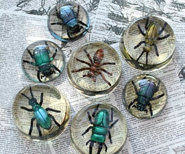 Faux Bugs in Resin