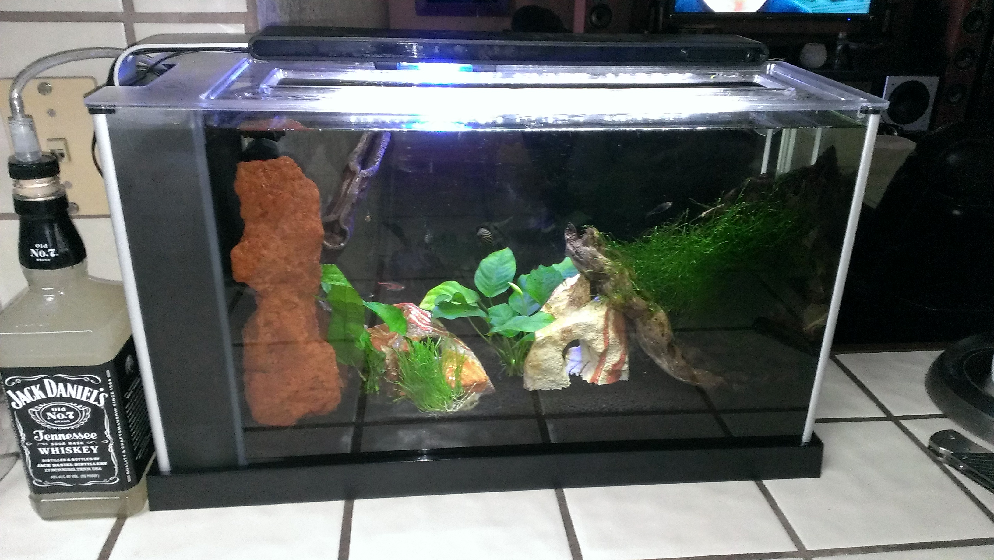 How to Make a Planted Aquarium CO2 Generator/Infuser: 5 Steps (with