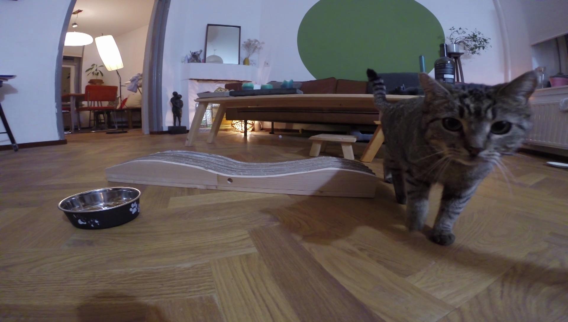 Picture of Verdict of the Cat!
