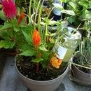 Wine bottle plant nanny