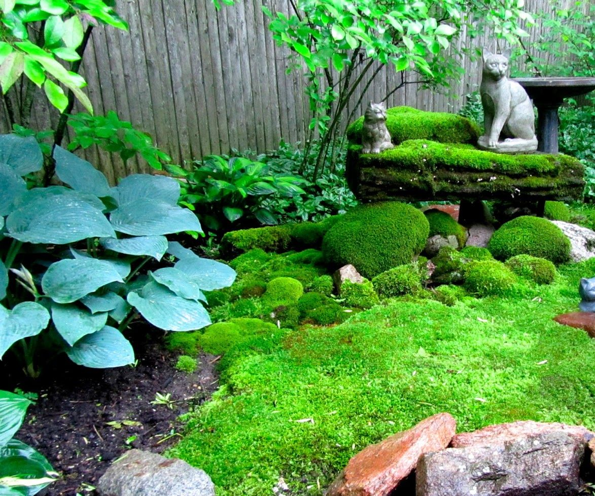 How To Create A Moss Garden 5 Steps Instructables