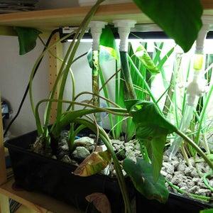 Grow Media and Plants