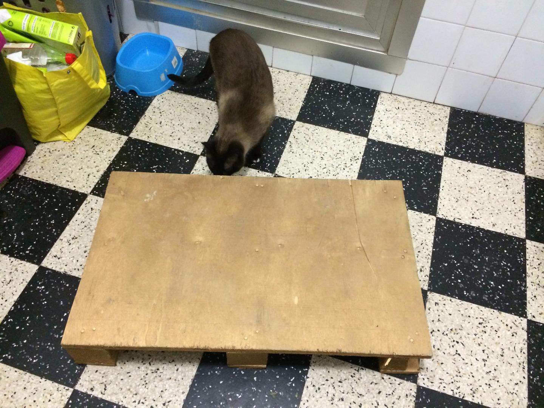 Picture of Cama Para Perro Con Palé
