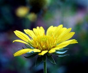 Create a Holistic Garden Plus 16 Gardening Tips