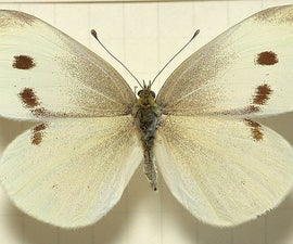 3D Printing a Cabbage Moth / Butterfly Decoy to Save Your Cabbage