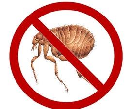 Get Rid of Fleas While You Sleep