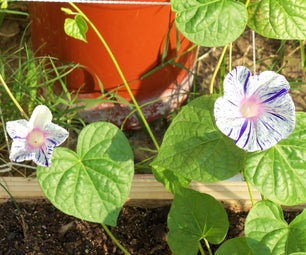 Apocalypse Garden/Backyard Beautification