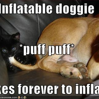 funny-pictures-kitten-inflates-an-inflatable-dog.jpg