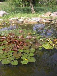 Pond / Watergarden Science
