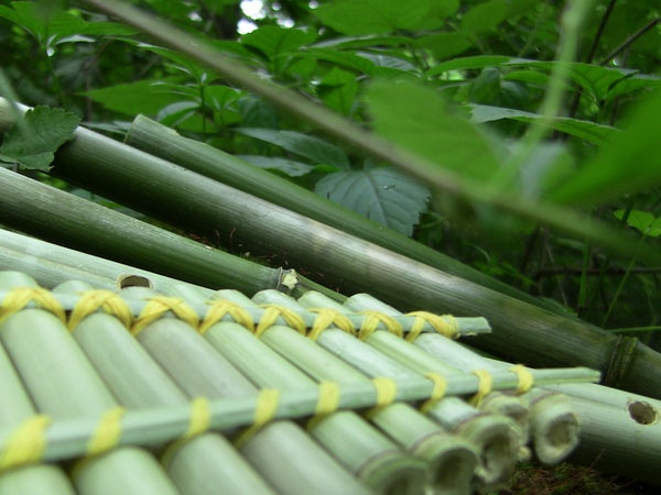 Make 4 Easy Bamboo Flutes for Free!