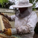 Basics for Backyard Beekeeping