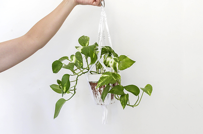 Picture of This Is How We Made This Simple Macramé Plant Hanger.