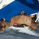 Bimini Style Dog Boat Seat ($25 Max, 1 Hour)
