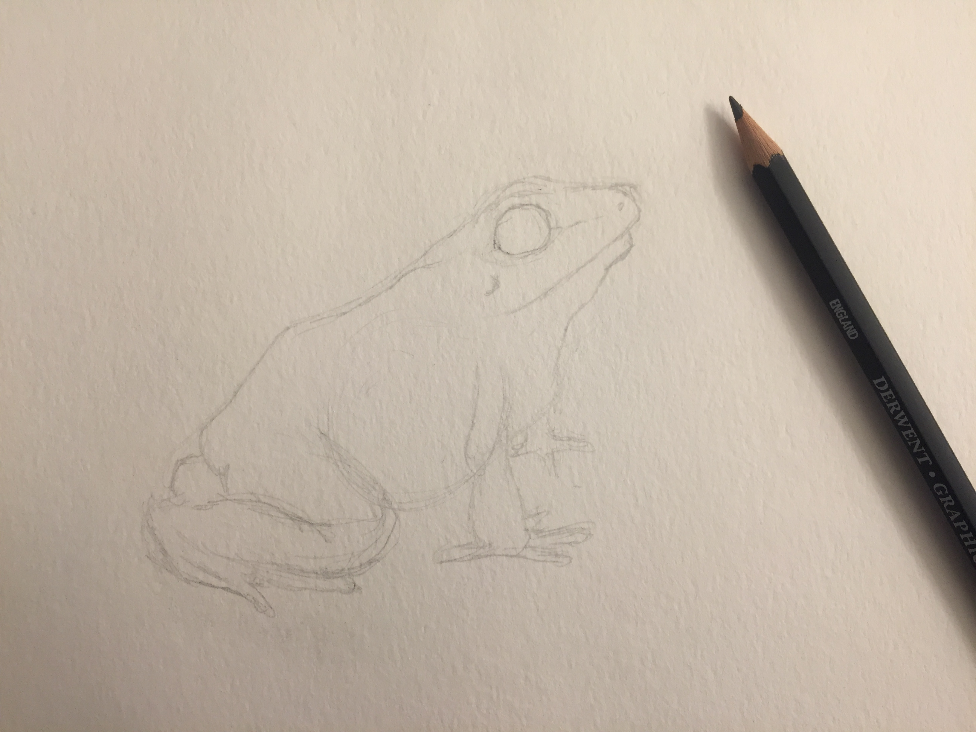 Picture of Sketch Your Frog