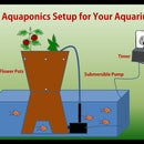 An Aquaponics Setup for Your Aquarium
