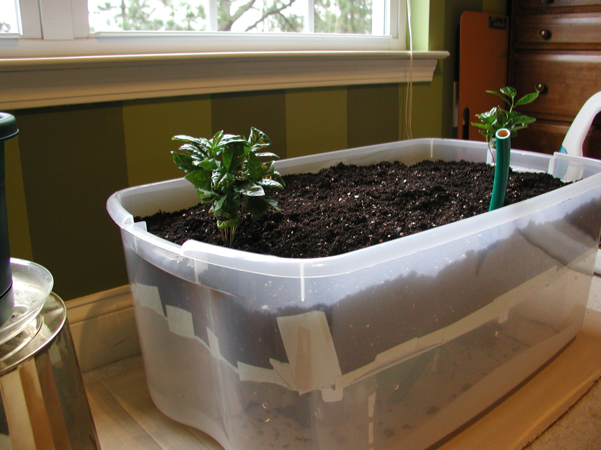 Picture of Fill With Dirt, Water, and Plants!