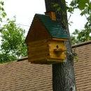 Flying Squirrel House W/Spy Cam