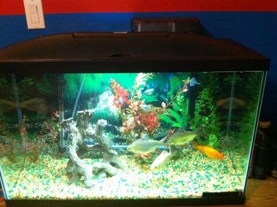 New to Fish Aquariums?