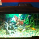 New To Fish Aquariums?