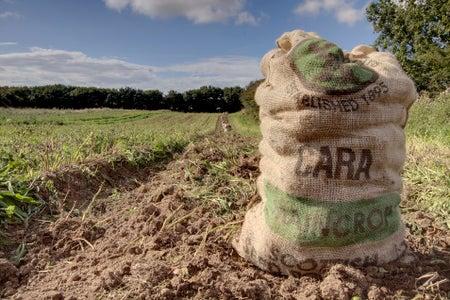 Grow a Ton of Potatoes