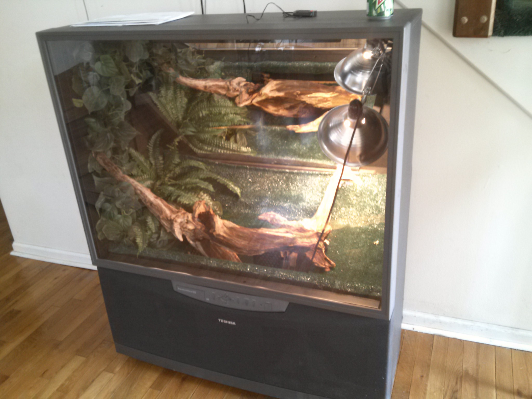 Picture of Iguana Cage