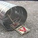 live catch trap