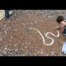 Sue Lawty's V&A 'World Beach Project': how to take part