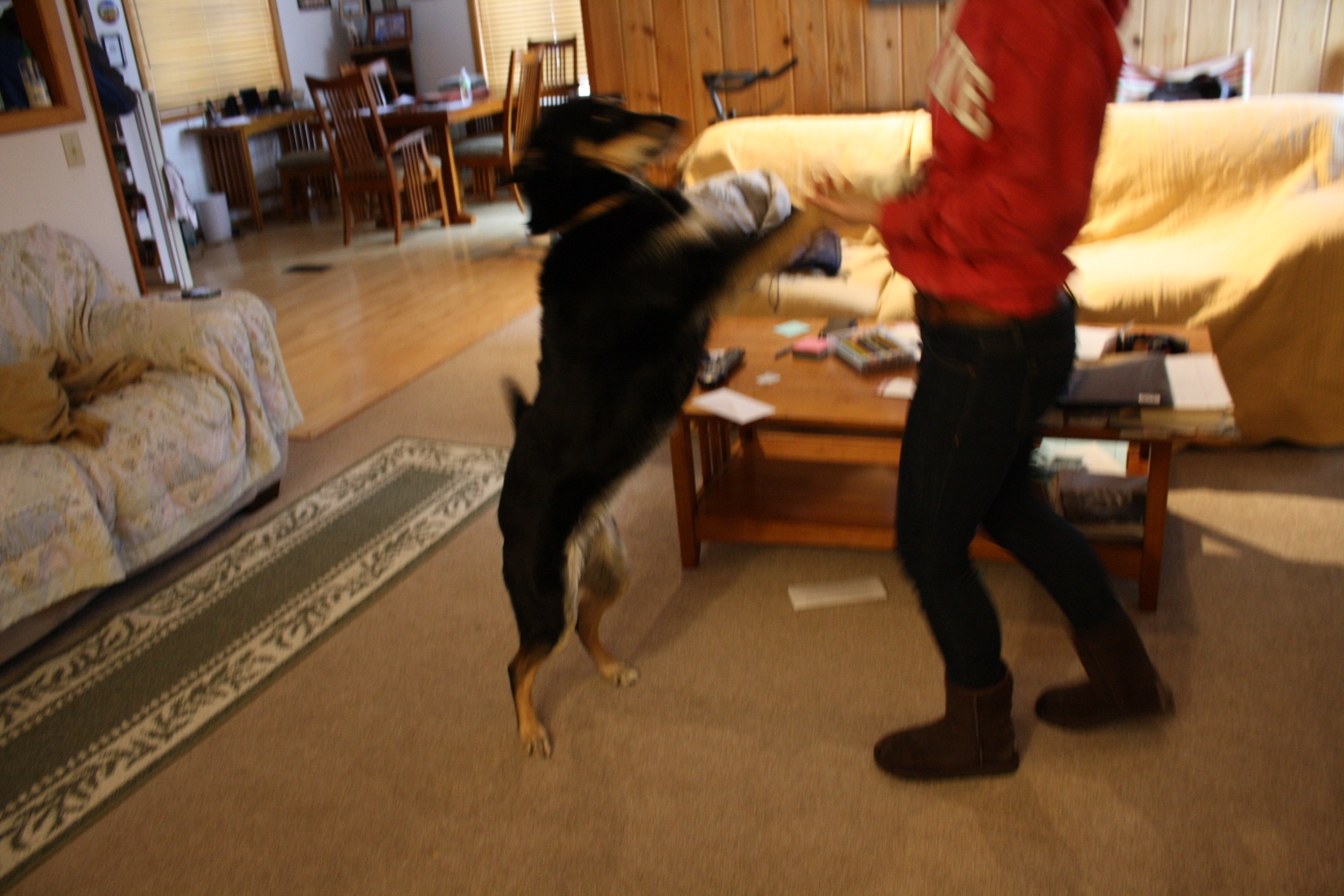 Picture of How to Make Your Dog Jump Up and Kiss Your Face