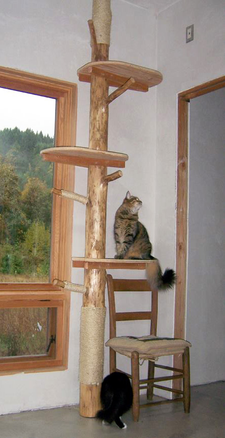 Picture of A Real Indoor Cat Tree