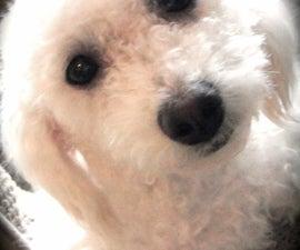 World's Best Dog Treats