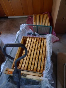Remove Honey Frames From Hives