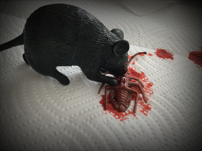 How to Make a Rat Eating a Cockroach Prop