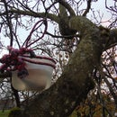 DIY Bird Water Feeder