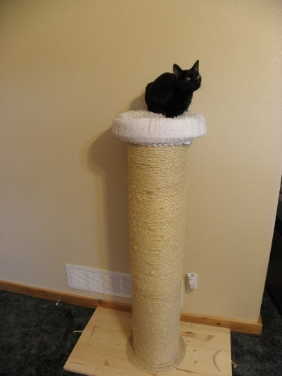 Best Cat Scratching Post Ever AND Cat Weight-loss Device