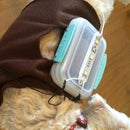DIY Dog Light Using Piezoelectricity