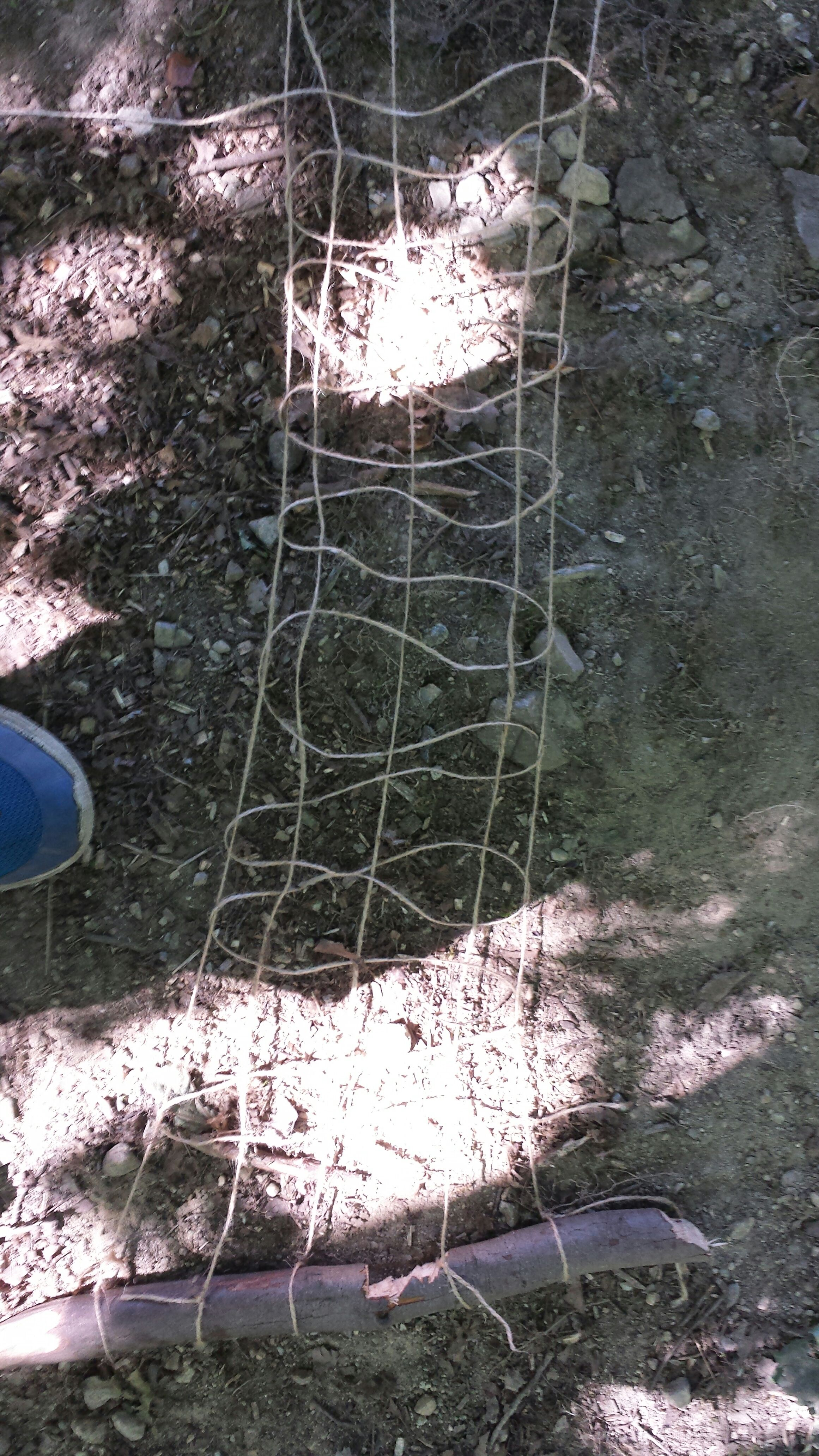 Picture of Fishing Net