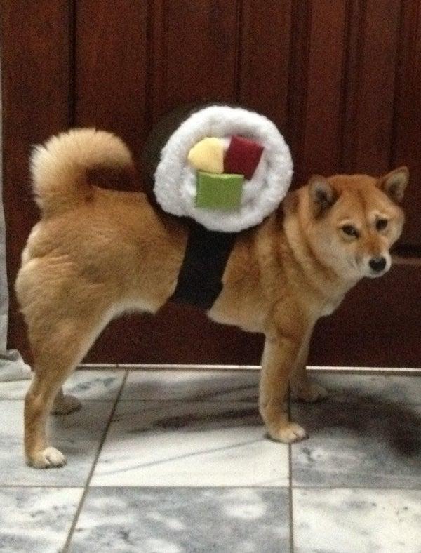 Sushi Roll Dog Costume