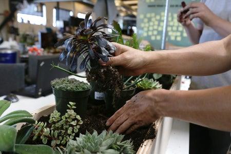 Plant the Plants