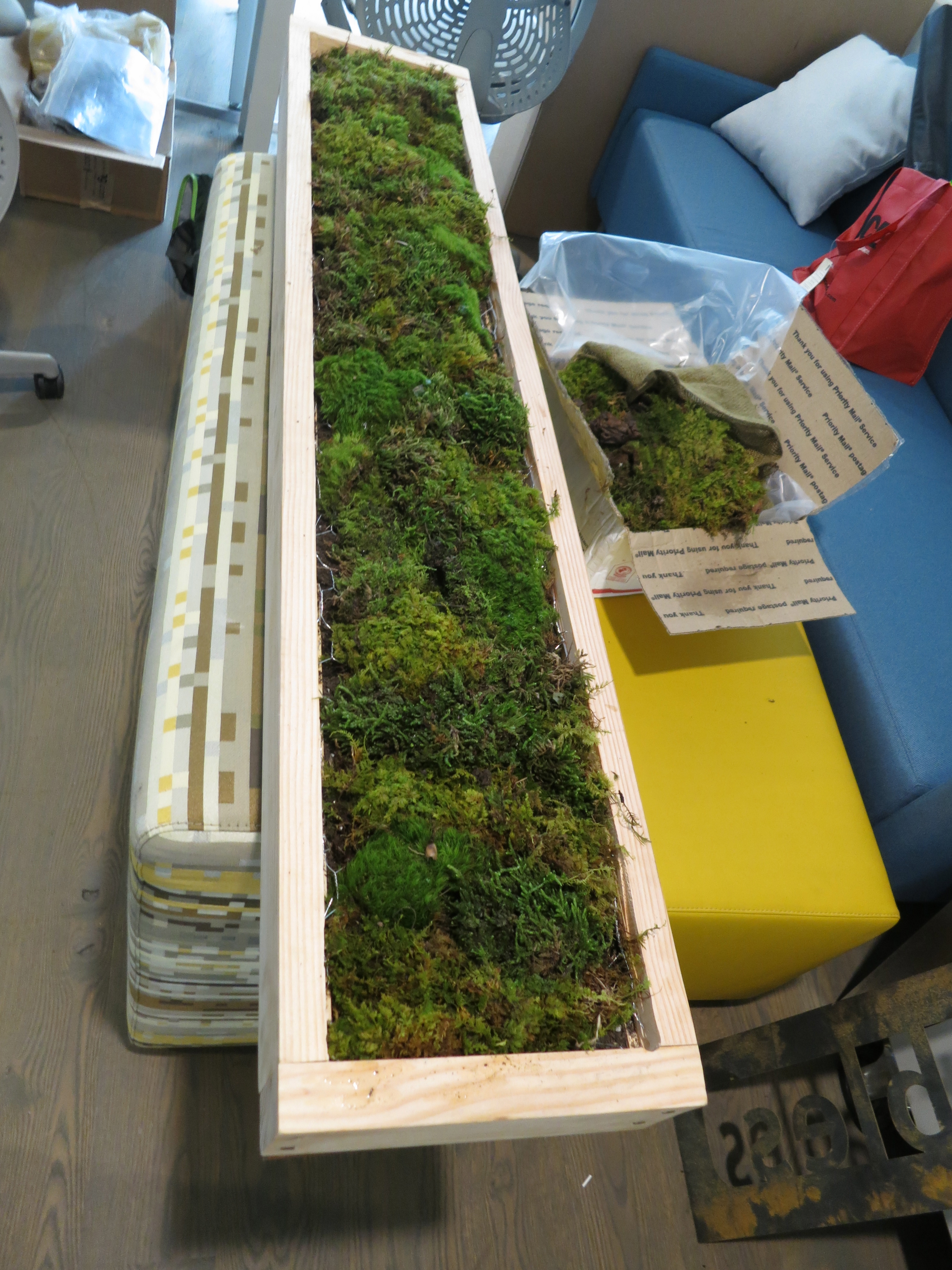 Picture of Plant Moss