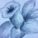 How to Draw an Easy Daffodil