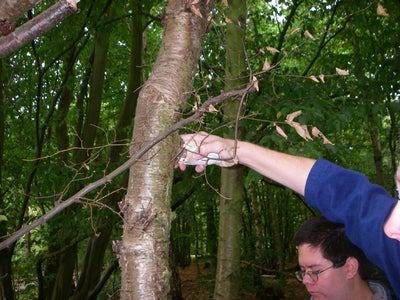 Removing the Polypore