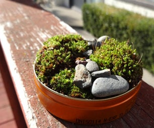 Mini Moss Garden From Backyard Materials