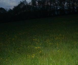 Dandelions in the Dark
