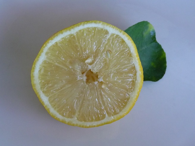 Picture of What would cause a fresh, tree-ripened lemon to lose it's flavor?