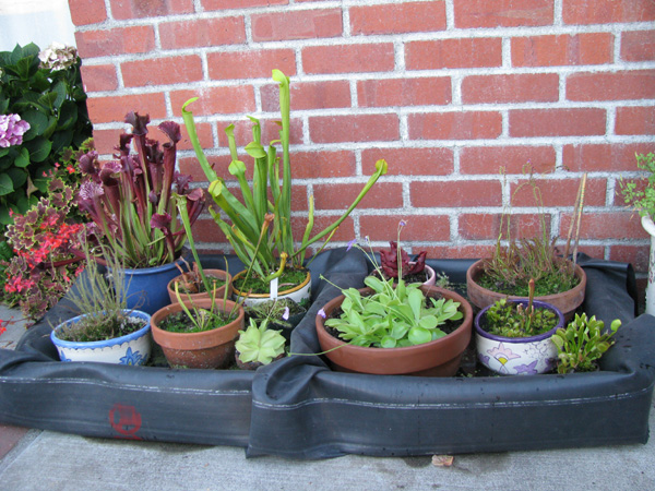 Picture of Fill the Trays With Water and Put Your Plants Inside