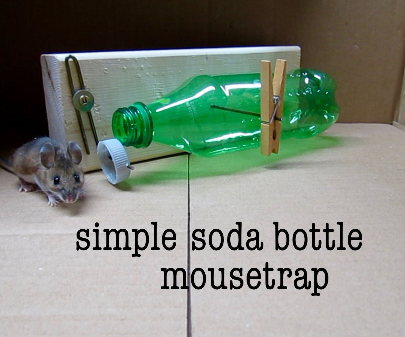 Diy Simple Soda Bottle Mousetrap 11 Steps With Pictures