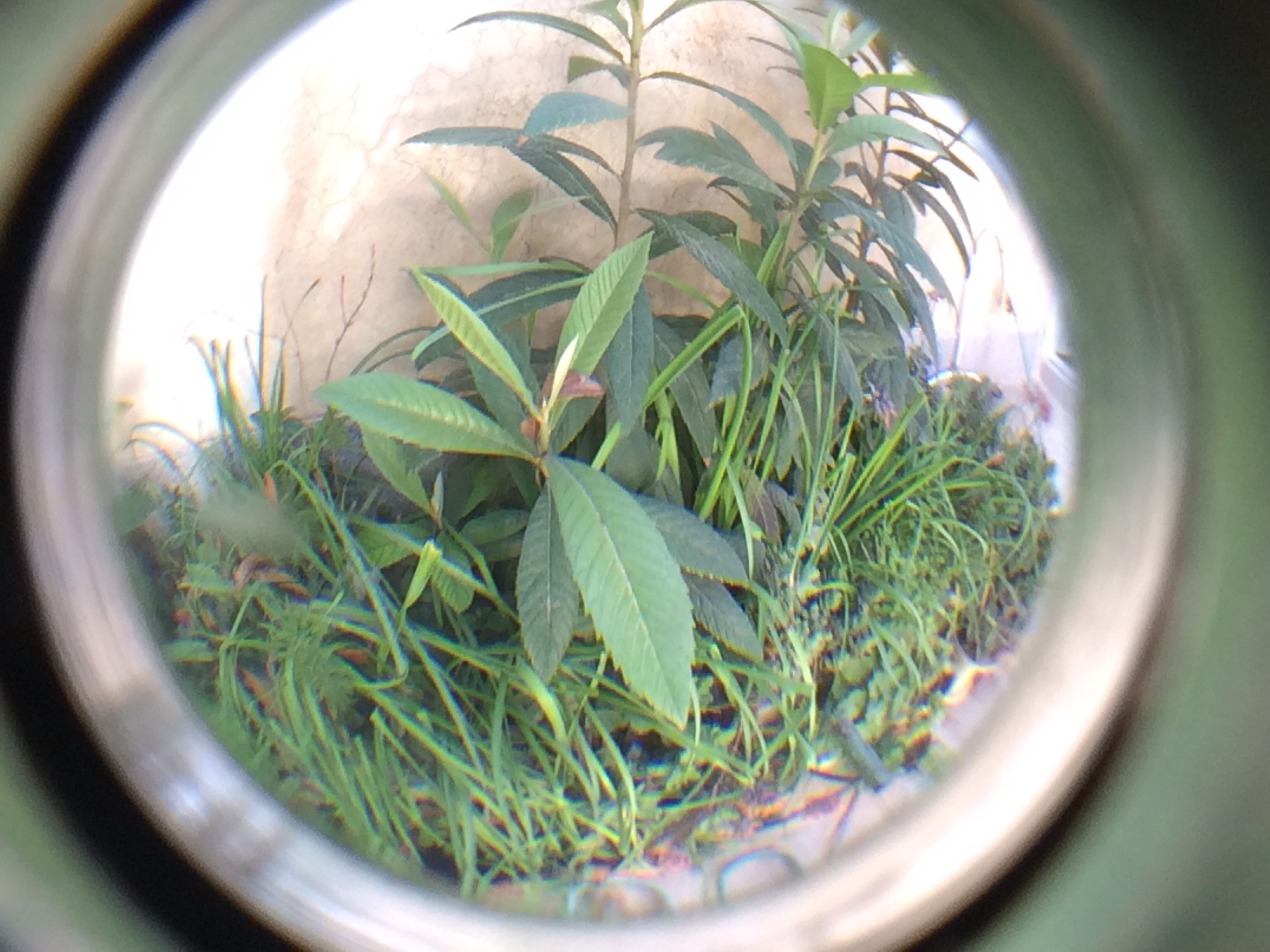 Picture of Fisheye for Iphone
