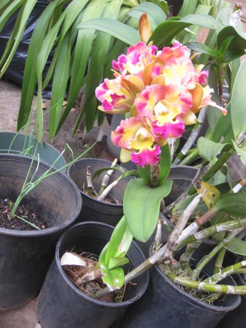 Picture of Nida's Garden
